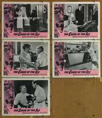 p739 CURSE OF THE FLY 5 movie lobby cards '65 Brian Donlevy, Baker