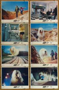 p173 DIGBY THE BIGGEST DOG IN THE WORLD 8 movie lobby cards '74