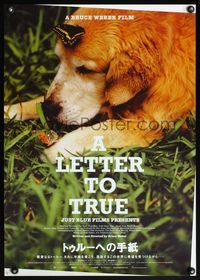 4v272 LETTER TO TRUE Japanese '05 cute image of dog laying in grass w/butterflies!