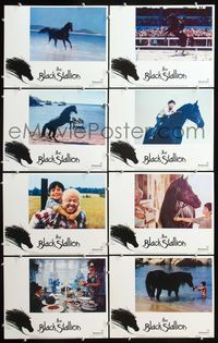 5h055 BLACK STALLION 8 LCs '79 Carroll Ballard directed, image of horse on beach!
