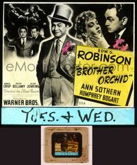 6h070 BROTHER ORCHID glass slide '40 Edward G. Robinson + 2 images of Humphrey Bogart!
