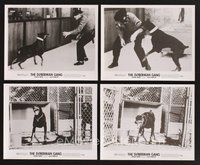 2r065 DOBERMAN GANG 15 8x10 stills '72 images of scary dogs on the loose attacking guard!
