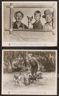 3j055 GOOD-BYE MY LADY 16 8x10 stills '56 Brandon de Wilde is a one-dog boy, Walter Brennan!