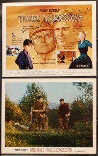 5r046 THOSE CALLOWAYS 9 LCs '65 Walt Disney, Brian Kieth, Brandon DeWilde, Vera Miles