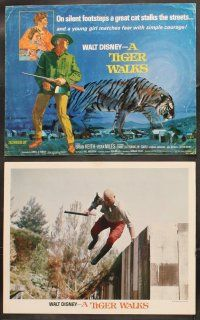 5r047 TIGER WALKS 9 LCs '64 Walt Disney, Brian Keith & cops looks for huge prowling tiger!