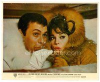 6r010 GREAT RACE color 8x10 still '65 c/u of Tony Curtis & Natalie Wood in fur drinking champagne!