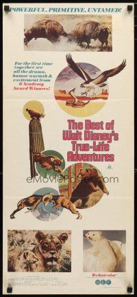 2d364 BEST OF WALT DISNEY'S TRUE-LIFE ADVENTURES Aust daybill '75 powerful, primitive, animal art!