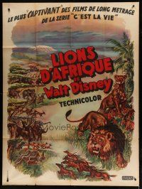 6k547 AFRICAN LION French 1p '55 Walt Disney jungle safari documentary, cool animal artwork!