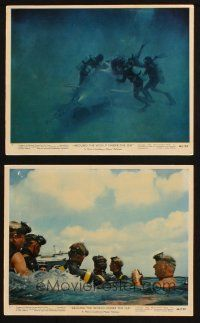 7h277 AROUND THE WORLD UNDER THE SEA 2 color 8x10 stills '66 cool scuba diving images!