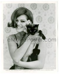8h212 CLAUDIA CARDINALE 8x10.25 still '65 sexy smiling c/u with Siamese cat from Blindfold!