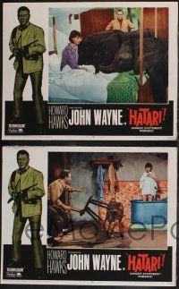 8y911 HATARI 3 LCs R67 Howard Hawks, John Wayne in Africa, Elsa Martinelli w/ elephants and leopard