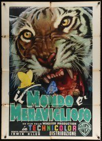 4y067 ANIMAL WORLD Italian 1p '56 wonderful different Luigi Martinati art of giant snarling tiger!