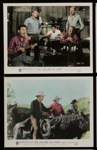 7s045 LION & THE HORSE 10 color 8x10 stills '52 Steve Cochran & Wildfire in the title role!