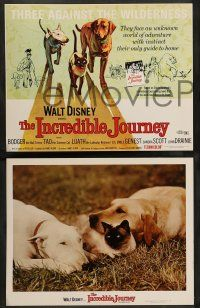 8z730 INCREDIBLE JOURNEY 5 LCs R74 Disney, Bull Terrier, Siamese cat & Labrador Retriever!