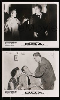 9s717 D.O.A. 4 8x10 stills R96 great images of Edmond O'Brien & Pamela Britton, classic noir!