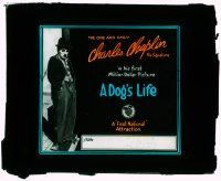 1x025 DOG'S LIFE glass slide '18 great c/u of Charlie Chaplin in his first Million Dollar Picture!
