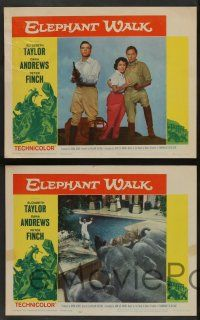 2w493 ELEPHANT WALK 6 LCs R60 romantic images of Elizabeth Taylor w/ Dana Andrews and Peter Finch!