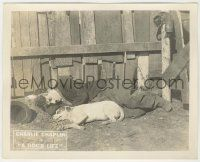 6d006 DOG'S LIFE 8x10 LC '18 close up of Charlie Chaplin laying on ground with dog by fence!