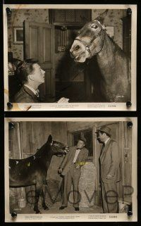 6m621 FRANCIS COVERS THE BIG TOWN 16 8x10 stills '53 images of Donald O'Connor & the talking mule!