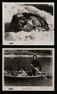 6m806 NIKKI 7 8x10 stills R72 Walt Disney, James Oliver Curwood, cool art of man & his dog!