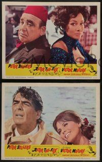 6z035 AFTER THE FOX 8 LCs '66 De Sica's Caccia alla Volpe, Peter Sellers, Victor Mature!