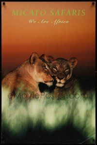 7g035 MICATO SAFARIS 24x36 travel poster '90s wonderful close-up of female lions in tall grass!