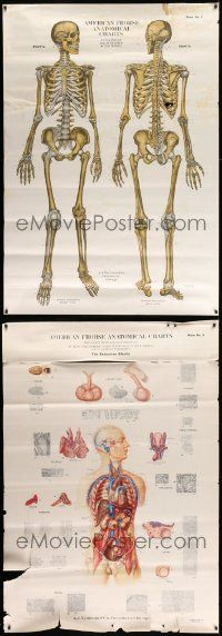 8a020 LOT OF 3 UNFOLDED 44x63 SPECIAL POSTERS '50s all with cool diagrams of the human body!