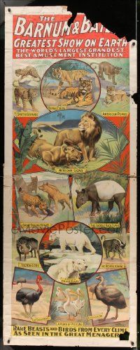 8c005 BARNUM & BAILEY GREATEST SHOW ON EARTH 30x78 circus poster 1901 best art of wild animals!