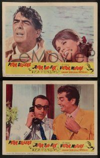 8w031 AFTER THE FOX 8 LCs '66 De Sica's Caccia alla Volpe, Peter Sellers, Victor Mature!