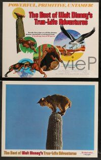 9r011 BEST OF WALT DISNEY'S TRUE-LIFE ADVENTURES 9 LCs '75 powerful, primitive, cool animal images!