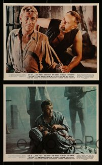7s009 LORD JIM 11 color 8x10 stills 1965 Richard Brooks, images of Peter O'Toole!