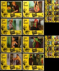 7x008 LOT OF 32 DEADLY BEES LOBBY CARDS 1967 four identical complete sets of 8 cards!