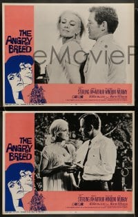 9r044 ANGRY BREED 8 LCs 1968 bikers buck the establishment, Jan Sterling, James MacArthur!
