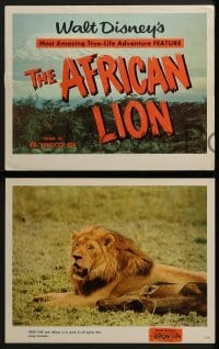 2x444 AFRICAN LION 9 LCs 1955 Walt Disney's most amazing True-Life adventure feature, animal images!