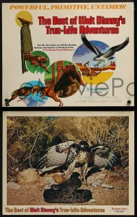 2x476 BEST OF WALT DISNEY'S TRUE-LIFE ADVENTURES 8 LCs 1975 powerful, primitive, cool animal images!