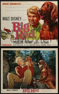 2x477 BIG RED 8 LCs 1962 Walt Disney, Walter Pigeon, Gilles Payant, Irish Setter dog!