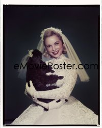 4d025 LIVING IT UP 8x10 transparency 1954 Janet Leigh c/u in wedding gown holding her cute dog!