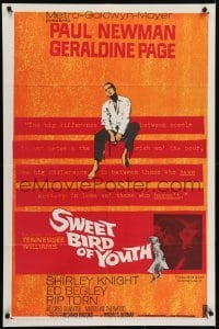 4s895 SWEET BIRD OF YOUTH 1sh 1962 Paul Newman, Geraldine Page, from Tennessee Williams' play!