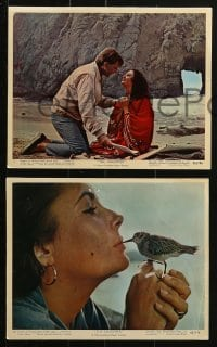 7d037 SANDPIPER 9 color 8x10 stills 1965 Elizabeth Taylor & Burton mostly on the beach!