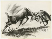 7h104 BAMBI 6.75x9 still 1942 pencil sketch of Bambi & Ronno in buck fight for Faline!
