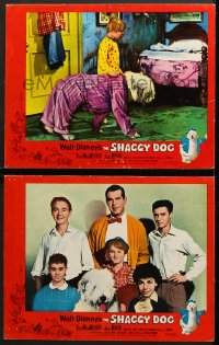 7z939 SHAGGY DOG 2 LCs 1959 Disney, Fred MacMurray in the funniest sheep dog story ever told!