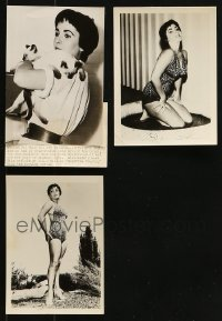 1s964 LOT OF 3 ELIZABETH TAYLOR 5X7 NEWS PHOTOS 1950s sexy swimsuit portraits & holding kittens!