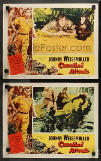 3k810 CANNIBAL ATTACK 2 LCs 1954 Johnny Weissmuller with kimba the Chimp, guys in alligator suits!