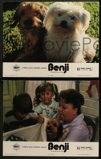 3k057 BENJI 8 LCs 1974 Joe Camp, classic dog movie, wonderful images!