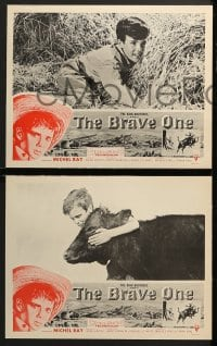 3k071 BRAVE ONE 8 LCs 1956 Irving Rapper directed western, written by Dalton Trumbo!