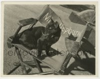 4d330 ESMERALDA THE CAT candid 8x10 still 1934 in Katharine Hepburn's chair on Spitfire set by Kahle!
