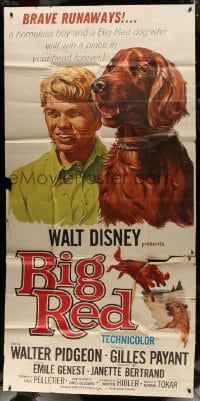 4w039 BIG RED 3sh 1962 Disney, Walter Pigeon, great portrait artwork of boy & Irish Setter dog!