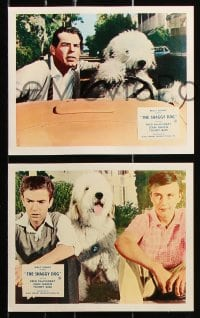 6d068 SHAGGY DOG 8 color English FOH LCs 1961 Disney, MacMurray, funniest sheep dog story ever told