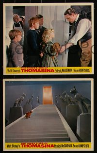 7k0040 THREE LIVES OF THOMASINA 6 color English FOH LCs 1964 Walt Disney, McGoohan, Hampshire, cat!