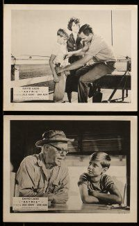 9s399 RAYMIE 8 English FOH LCs '60 David Ladd as the boy on the beach, Julie Adams, John Agar